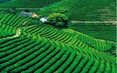 """国办印发《通知》严禁六种行为  坚决制止耕地""""非农化""""行为"""