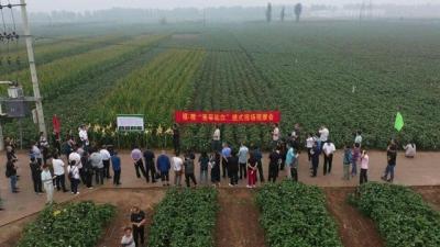 河北省棉花产业提质增效推进会在曲周县召开