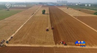 成安县积极推广良种良法 夯实小麦丰产基础
