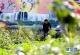 曲周:改善人居环境 助力乡村振兴