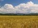 邯郸市小麦单产总产名列全省前茅