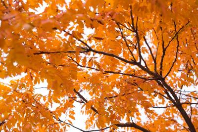 邯郸的秋天惊艳众人,渐浓声色写尽人间值得! 