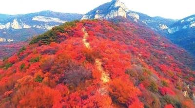 中国·涉县第三届庄子岭红叶文化旅游节启动