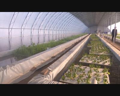 广平:鱼菜共生 生态种养助农增收