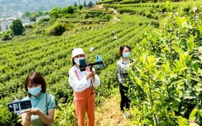 5G让手机成为新农具,直播成为新农活