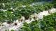 成安草莓区域公用品牌,助力特色农业大发展