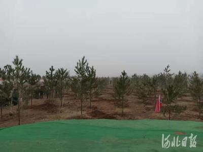 河北各地结合当地实际和重点林业工程积极开展义务植树活动
