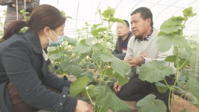 魏县主题实践活动推动经济社会高质量发展