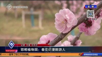 邯鄲植物園:春花爛漫醉有人