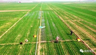 曲周:小麦施用新型肥料氨排放降低47.8%