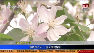 踏春四月天 一見心馳海棠花