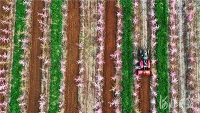 河北:春暖花开 田园农事忙
