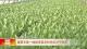 邯鄲:蔬菜專家一線指導菜農科學應對幹熱風