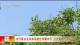邯鄲市氣象台發布高溫橙色預警信號 白天最高氣溫37.3℃
