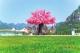 第六屆河北省旅遊產業發展大會——覽山林湖秀與星辰共眠