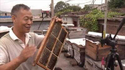 【快看邯鄲】磁縣出了個養蜂達人——王福田